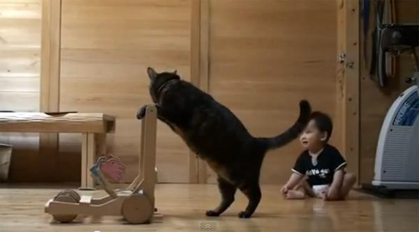 El gato que enseñaba a caminar a los bebés